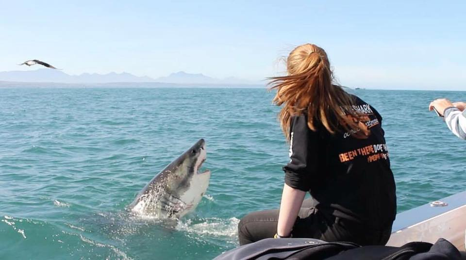 great white shark sighting south africa
